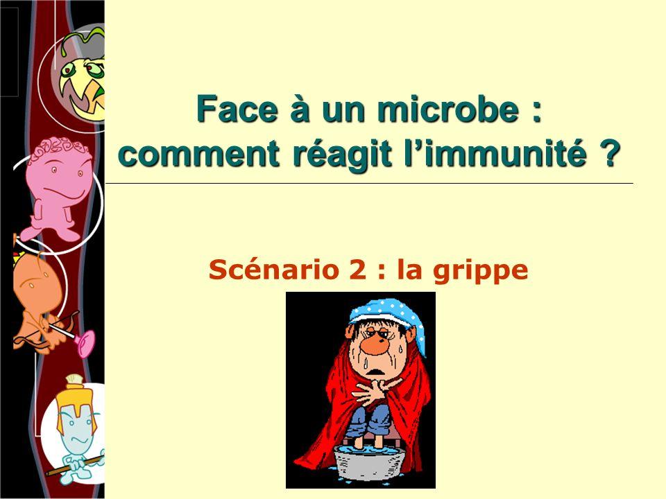 Face à un microbe : comment réagit limmunité ? Scénario 2 : la grippe