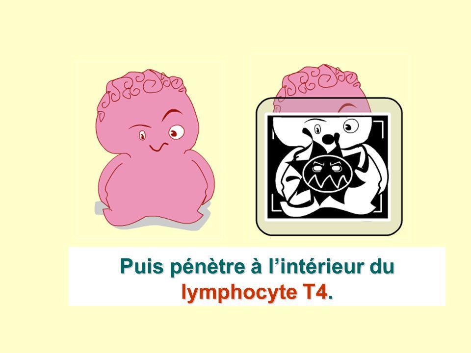 Puis pénètre à lintérieur du lymphocyte T4.