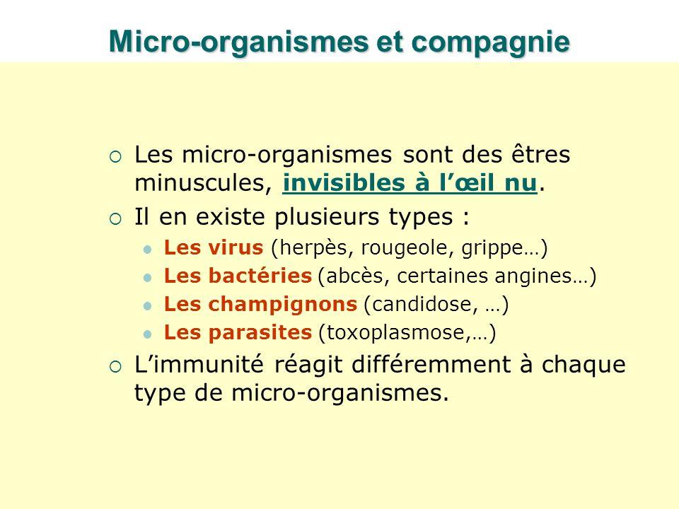 Micro-organismes et compagnie Les micro-organismes sont des êtres minuscules, invisibles à lœil nu.invisibles à lœil nu Il en existe plusieurs types :