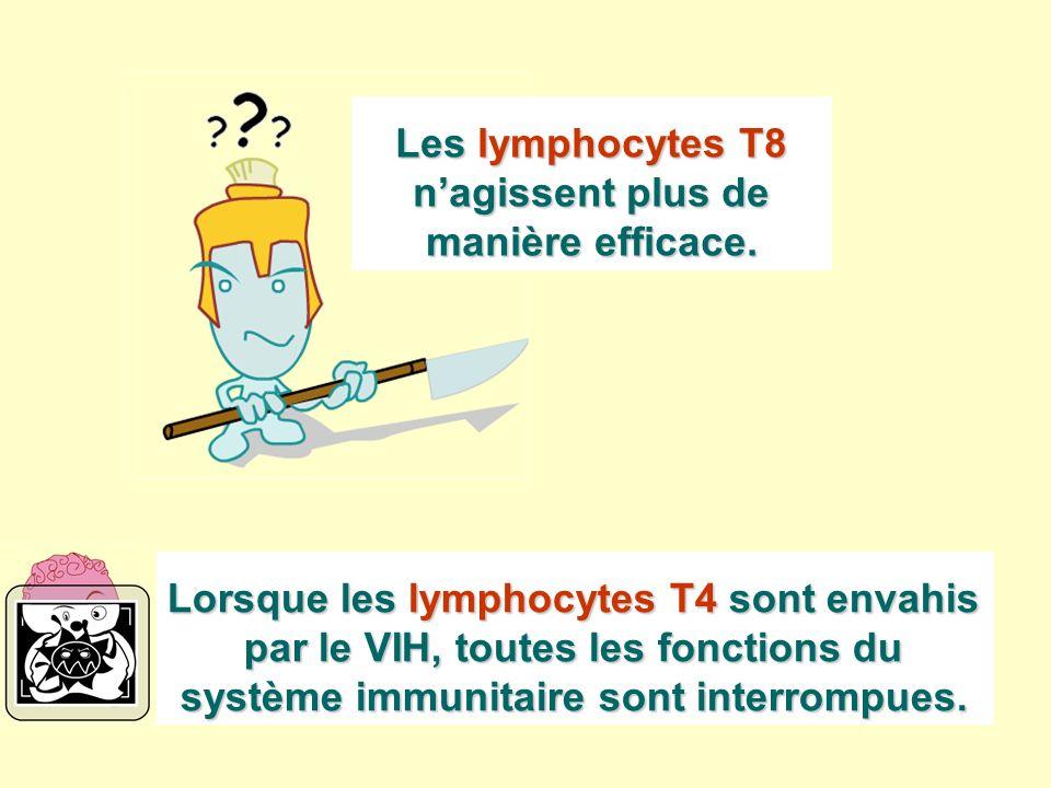 Lorsque les lymphocytes T4 sont envahis par le VIH, toutes les fonctions du système immunitaire sont interrompues. Les lymphocytes T8 nagissent plus d