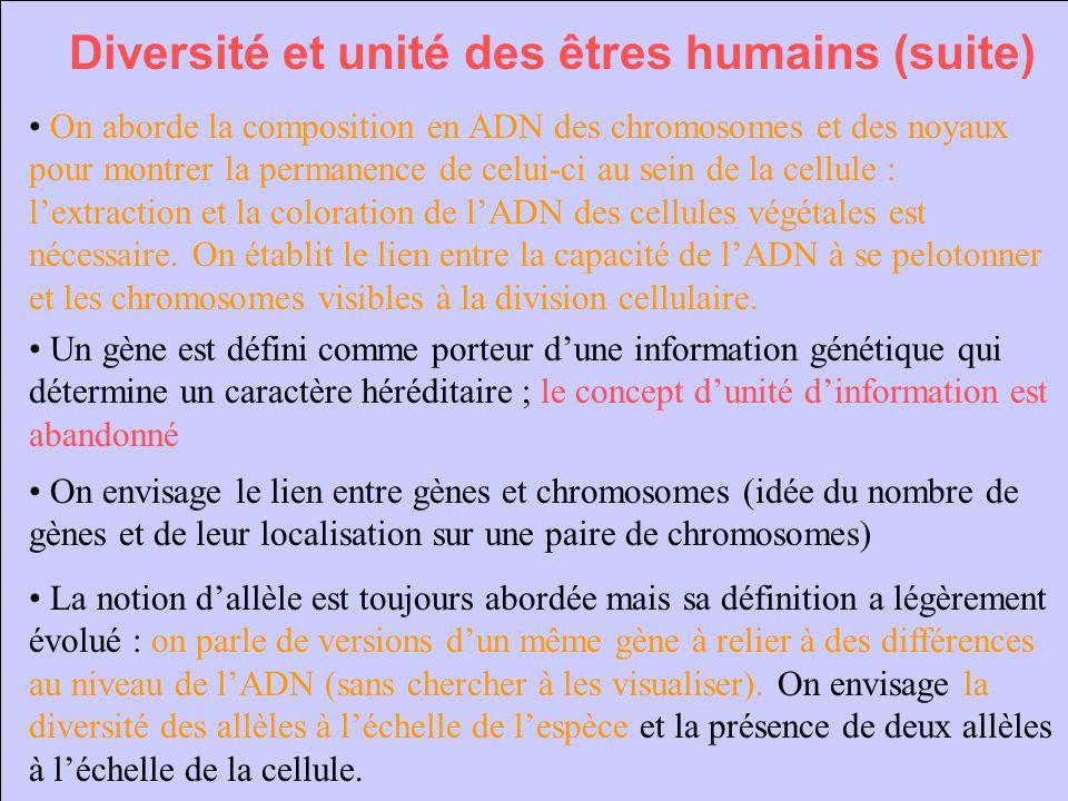 Diversité et unité des êtres humains (suite) On aborde la composition en ADN des chromosomes et des noyaux pour montrer la permanence de celui-ci au s