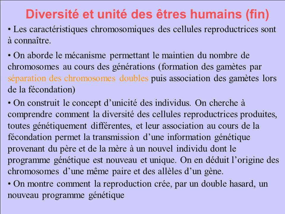 Diversité et unité des êtres humains (fin) Les caractéristiques chromosomiques des cellules reproductrices sont à connaître. On aborde le mécanisme pe