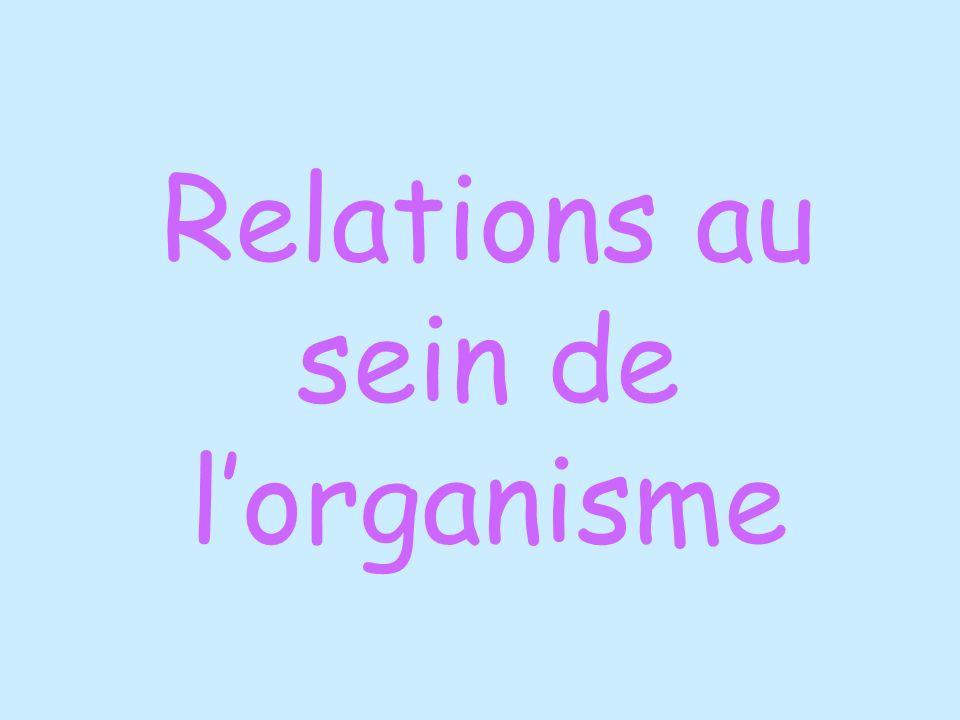 Relations au sein de lorganisme