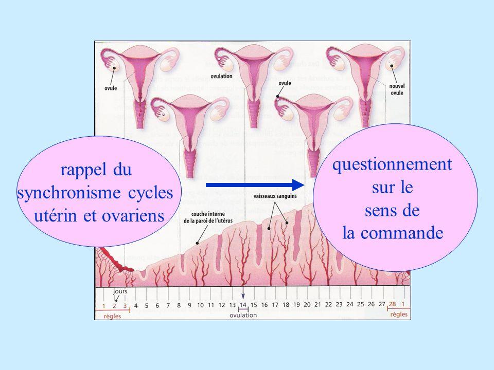 questionnement sur le sens de la commande rappel du synchronisme cycles utérin et ovariens