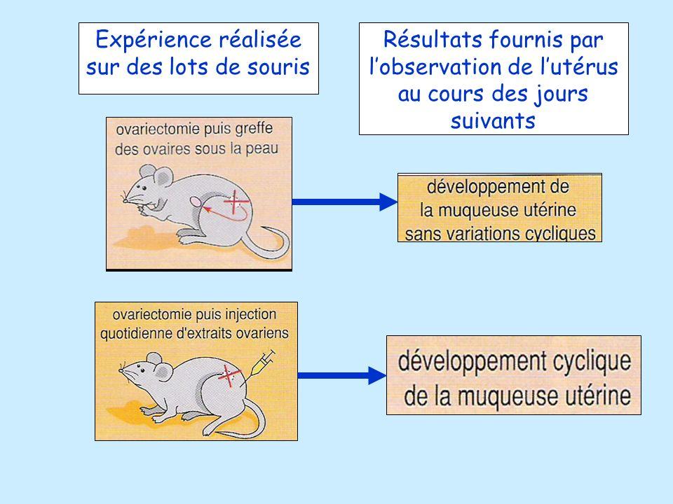 Expérience réalisée sur des lots de souris Résultats fournis par lobservation de lutérus au cours des jours suivants