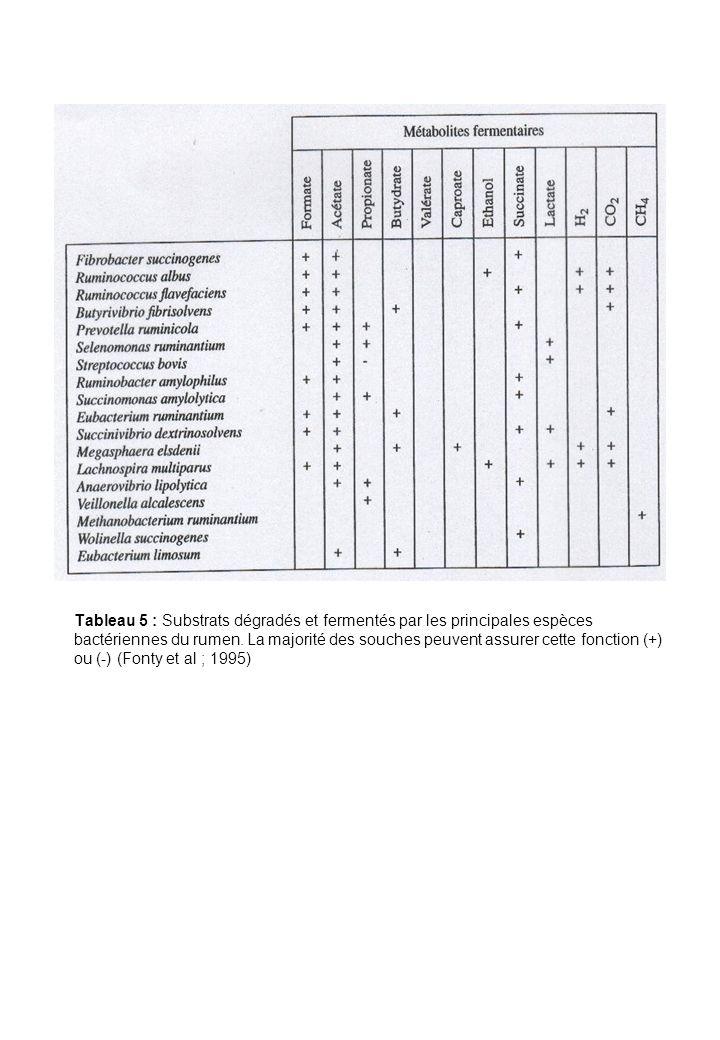 Tableau 5 : Substrats dégradés et fermentés par les principales espèces bactériennes du rumen. La majorité des souches peuvent assurer cette fonction