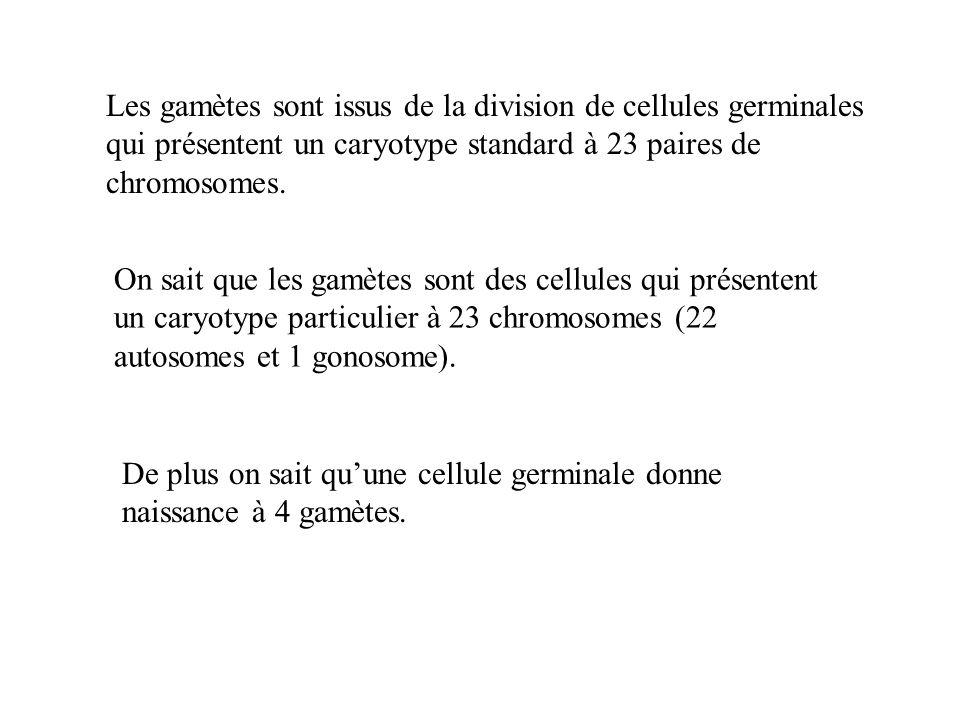 Les gamètes sont issus de la division de cellules germinales qui présentent un caryotype standard à 23 paires de chromosomes. On sait que les gamètes
