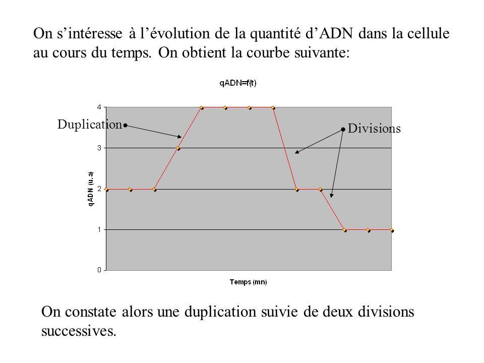 On sintéresse à lévolution de la quantité dADN dans la cellule au cours du temps. On obtient la courbe suivante: On constate alors une duplication sui