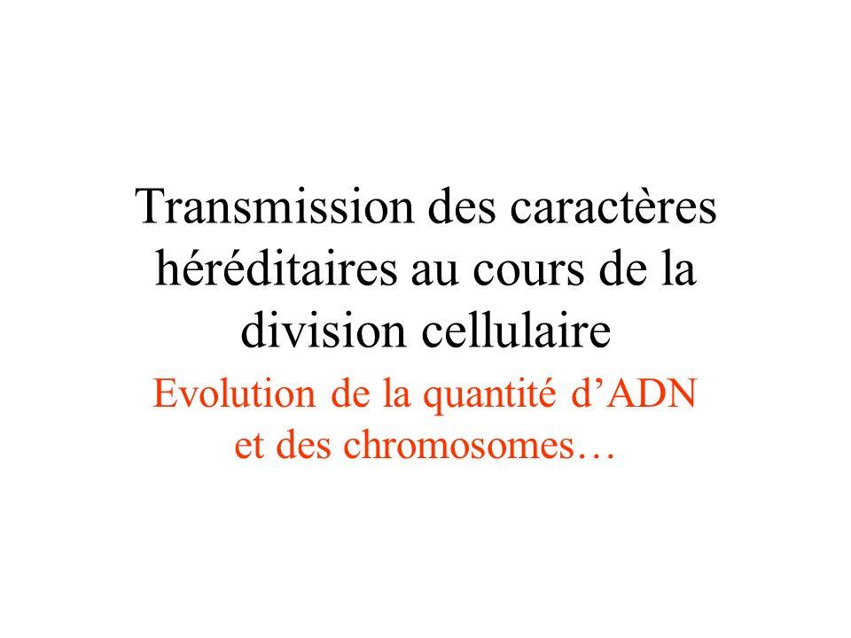 Transmission des caractères héréditaires au cours de la division cellulaire Evolution de la quantité dADN et des chromosomes…