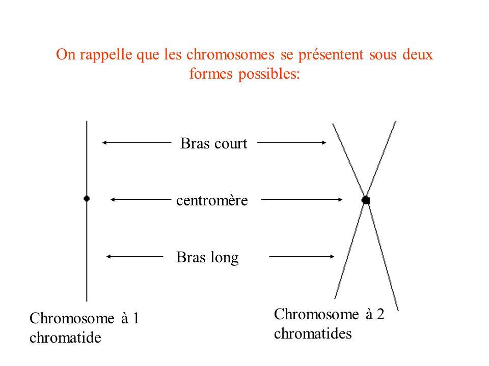 On rappelle que les chromosomes se présentent sous deux formes possibles: Bras court centromère Bras long Chromosome à 1 chromatide Chromosome à 2 chr