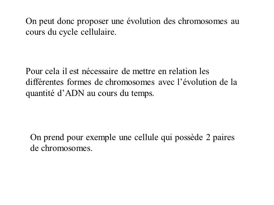 On peut donc proposer une évolution des chromosomes au cours du cycle cellulaire. Pour cela il est nécessaire de mettre en relation les différentes fo