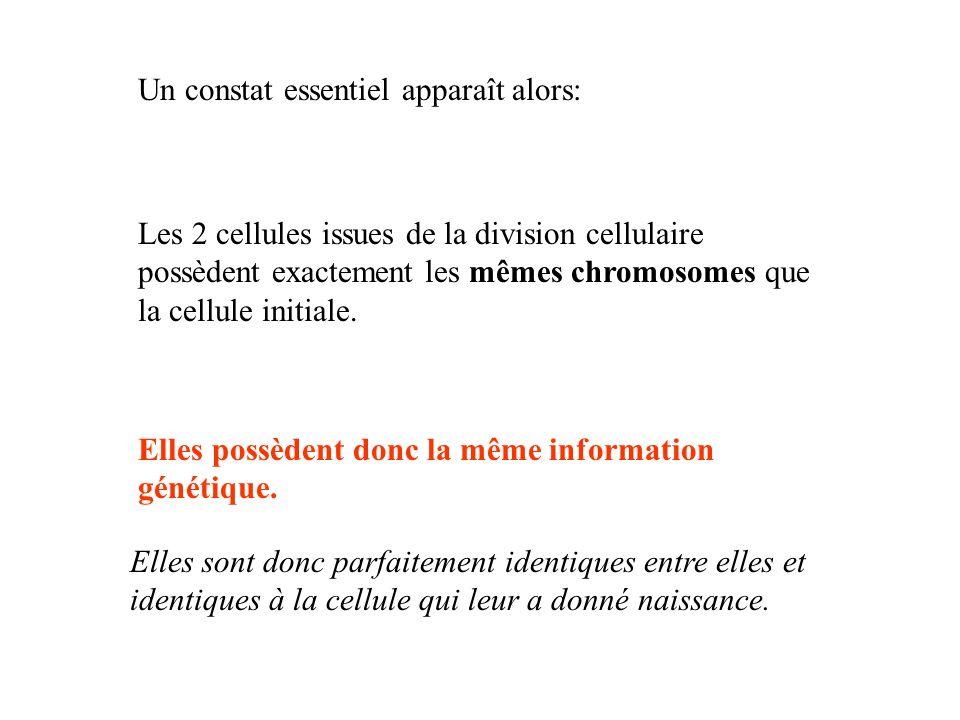 Un constat essentiel apparaît alors: Les 2 cellules issues de la division cellulaire possèdent exactement les mêmes chromosomes que la cellule initial