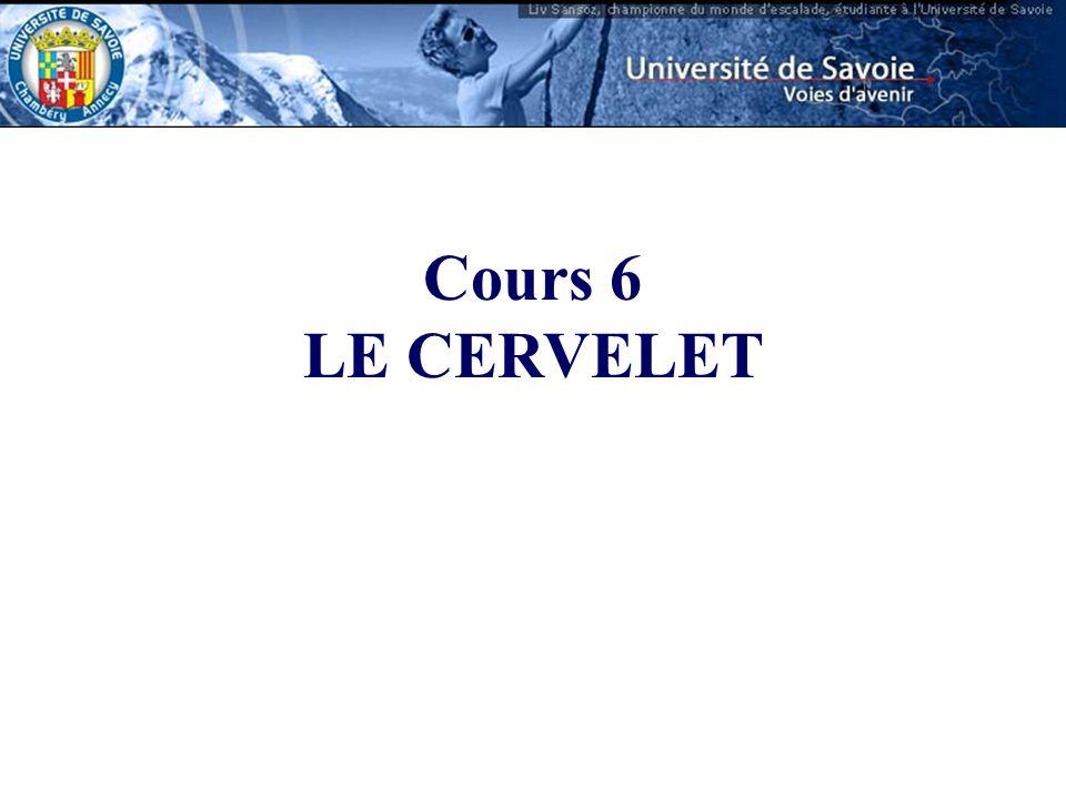Cours 6 LE CERVELET