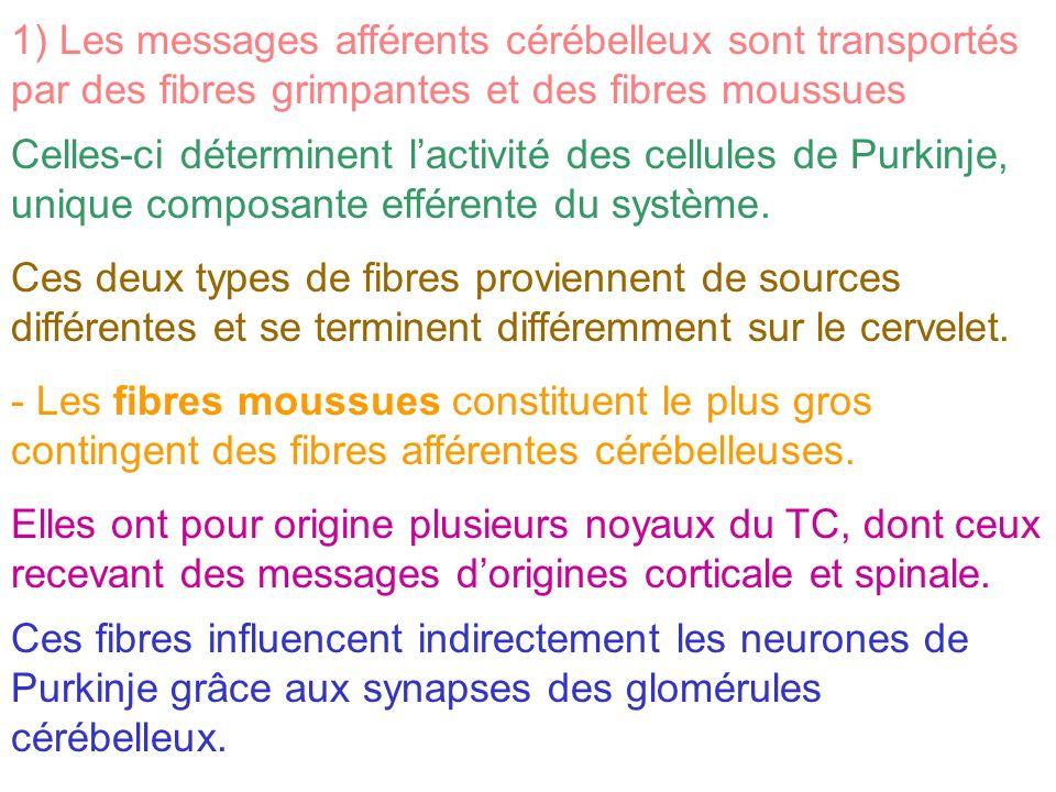 1) Les messages afférents cérébelleux sont transportés par des fibres grimpantes et des fibres moussues Celles-ci déterminent lactivité des cellules d