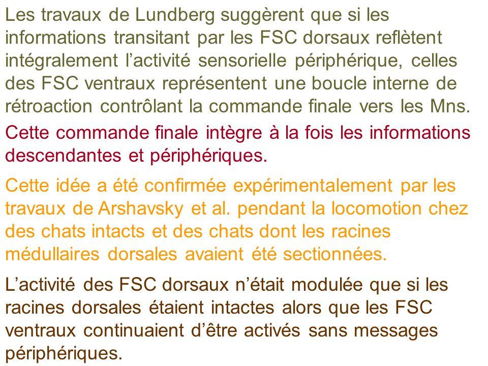 Les travaux de Lundberg suggèrent que si les informations transitant par les FSC dorsaux reflètent intégralement lactivité sensorielle périphérique, c
