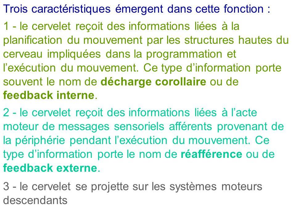 Trois caractéristiques émergent dans cette fonction : 1 - le cervelet reçoit des informations liées à la planification du mouvement par les structures