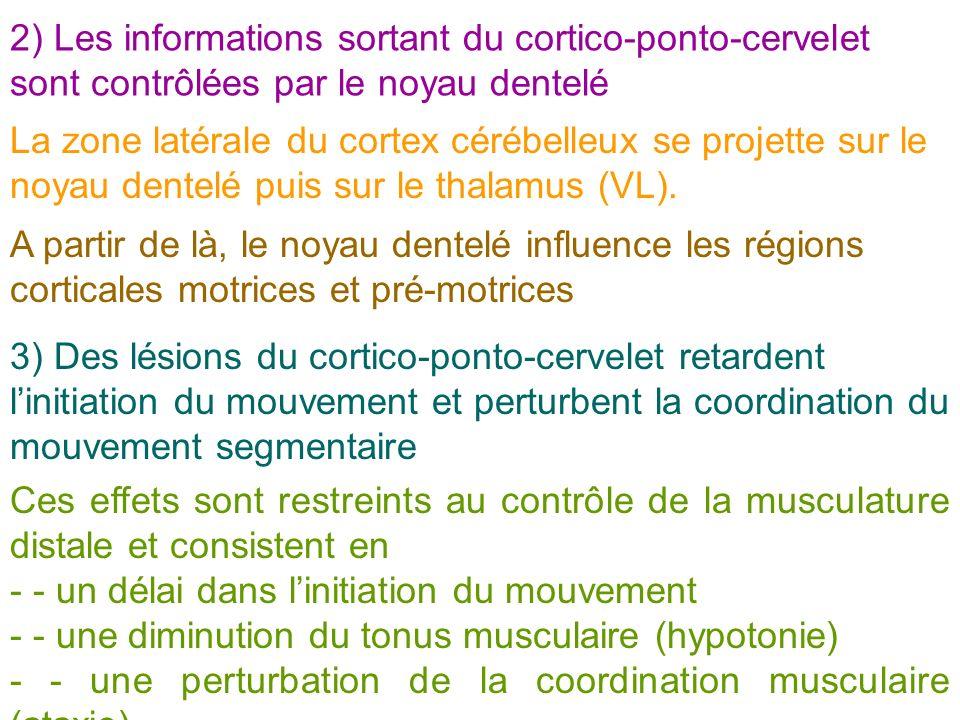2) Les informations sortant du cortico-ponto-cervelet sont contrôlées par le noyau dentelé La zone latérale du cortex cérébelleux se projette sur le n