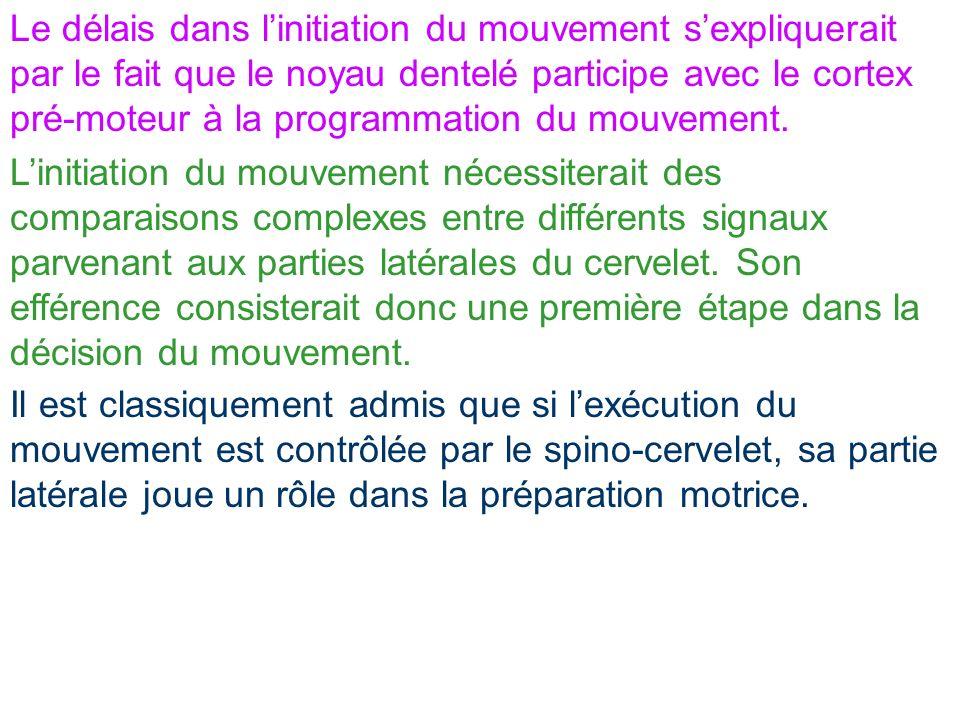 Le délais dans linitiation du mouvement sexpliquerait par le fait que le noyau dentelé participe avec le cortex pré-moteur à la programmation du mouve