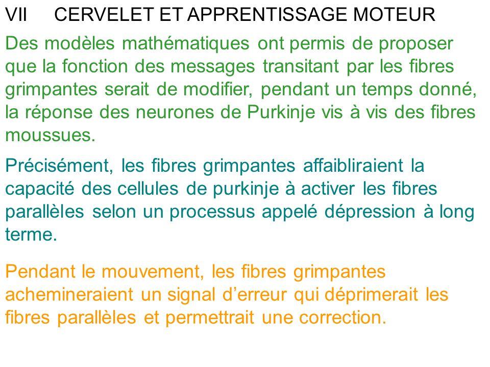 VIICERVELET ET APPRENTISSAGE MOTEUR Des modèles mathématiques ont permis de proposer que la fonction des messages transitant par les fibres grimpantes