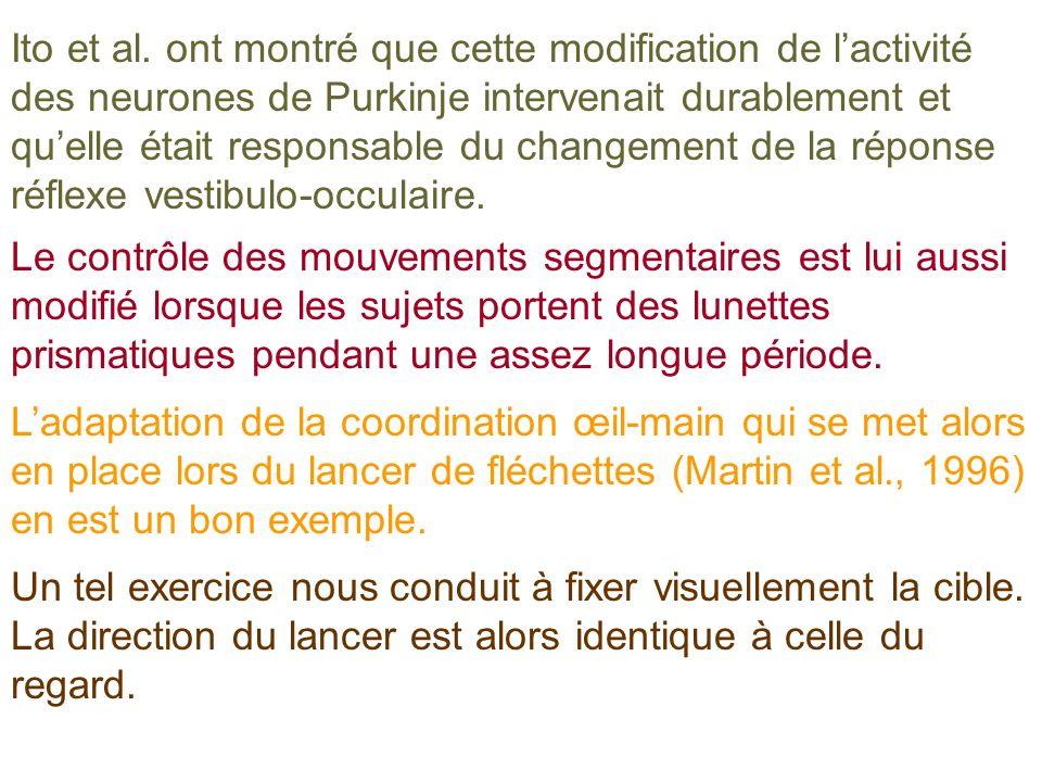 Ito et al. ont montré que cette modification de lactivité des neurones de Purkinje intervenait durablement et quelle était responsable du changement d