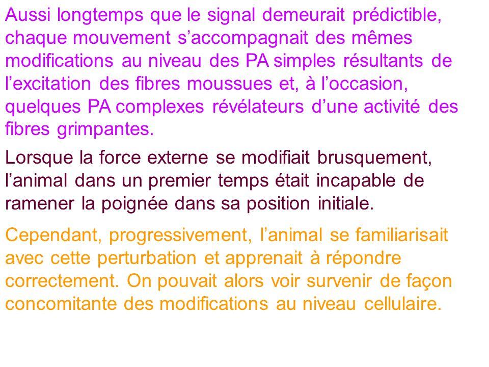 Aussi longtemps que le signal demeurait prédictible, chaque mouvement saccompagnait des mêmes modifications au niveau des PA simples résultants de lex