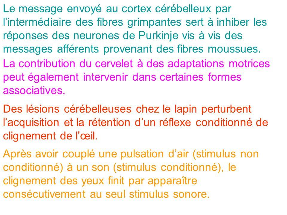 Le message envoyé au cortex cérébelleux par lintermédiaire des fibres grimpantes sert à inhiber les réponses des neurones de Purkinje vis à vis des me