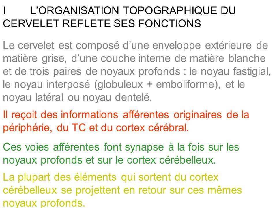 ILORGANISATION TOPOGRAPHIQUE DU CERVELET REFLETE SES FONCTIONS Il reçoit des informations afférentes originaires de la périphérie, du TC et du cortex