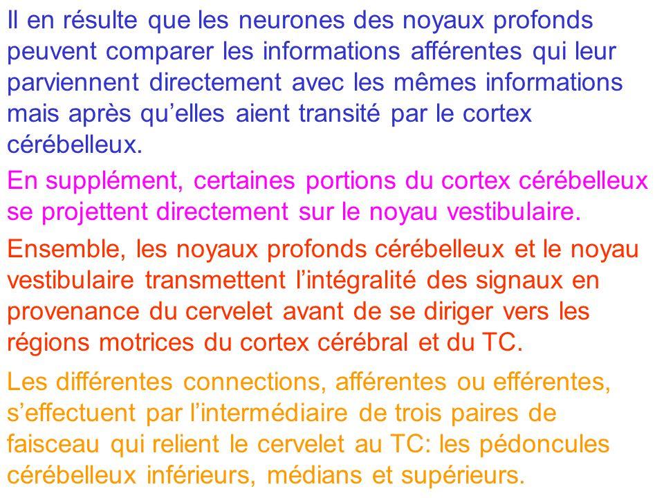 Il en résulte que les neurones des noyaux profonds peuvent comparer les informations afférentes qui leur parviennent directement avec les mêmes inform