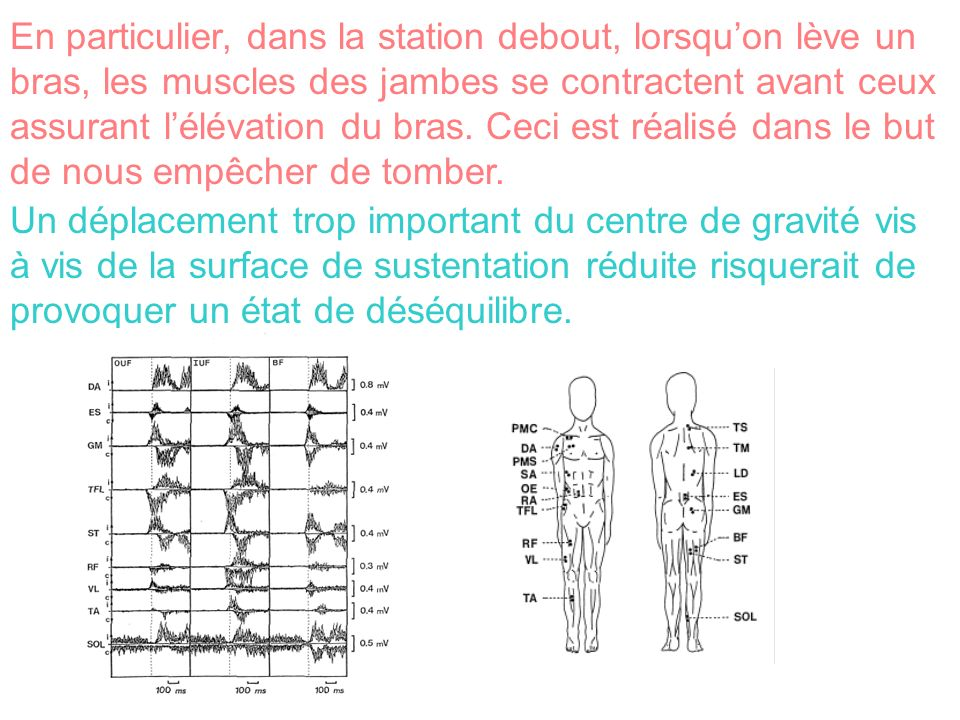 En particulier, dans la station debout, lorsquon lève un bras, les muscles des jambes se contractent avant ceux assurant lélévation du bras. Ceci est