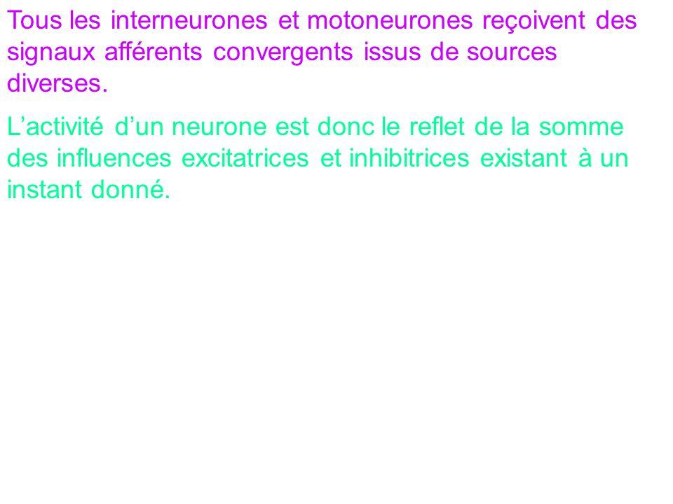 Tous les interneurones et motoneurones reçoivent des signaux afférents convergents issus de sources diverses. Lactivité dun neurone est donc le reflet