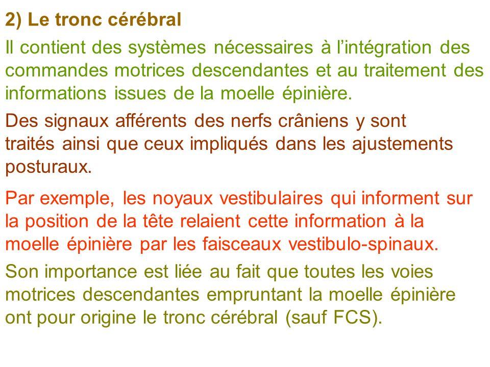 2) Le tronc cérébral Il contient des systèmes nécessaires à lintégration des commandes motrices descendantes et au traitement des informations issues