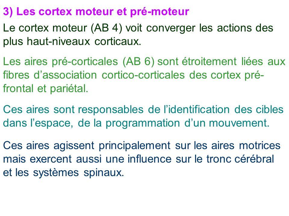 3) Les cortex moteur et pré-moteur Le cortex moteur (AB 4) voit converger les actions des plus haut-niveaux corticaux. Les aires pré-corticales (AB 6)