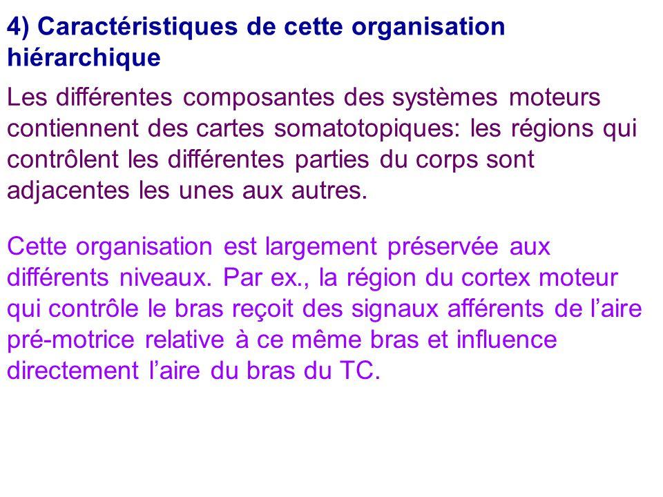4) Caractéristiques de cette organisation hiérarchique Les différentes composantes des systèmes moteurs contiennent des cartes somatotopiques: les rég