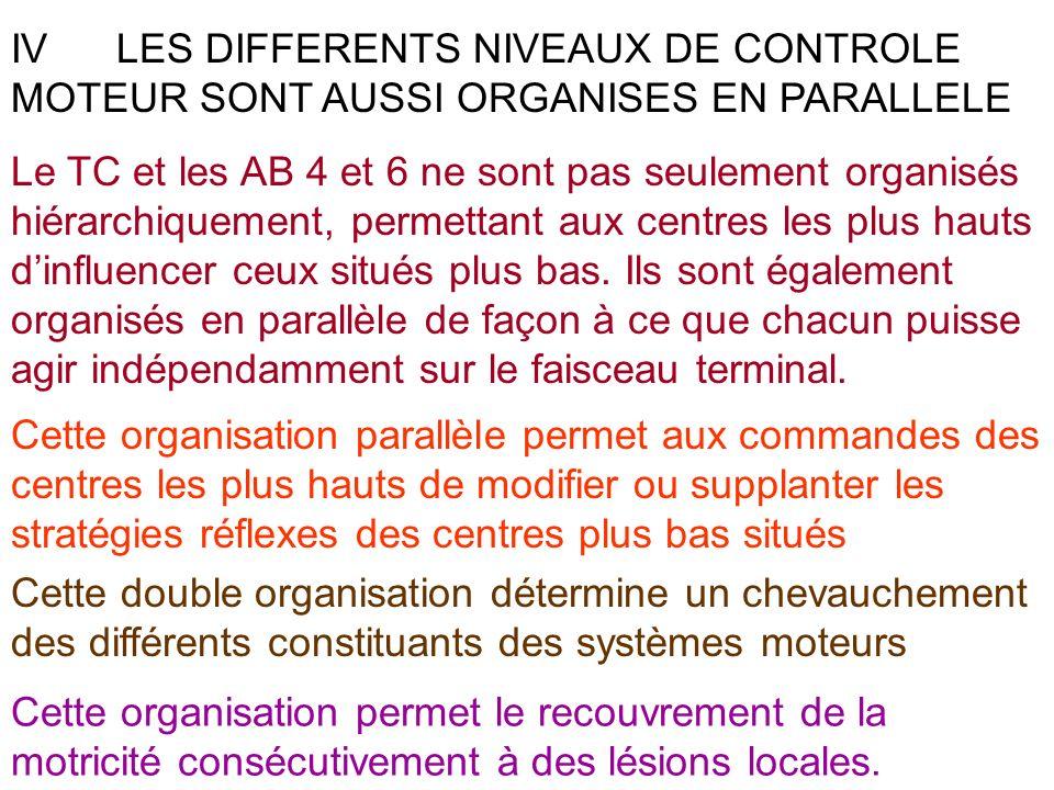 IVLES DIFFERENTS NIVEAUX DE CONTROLE MOTEUR SONT AUSSI ORGANISES EN PARALLELE Le TC et les AB 4 et 6 ne sont pas seulement organisés hiérarchiquement,
