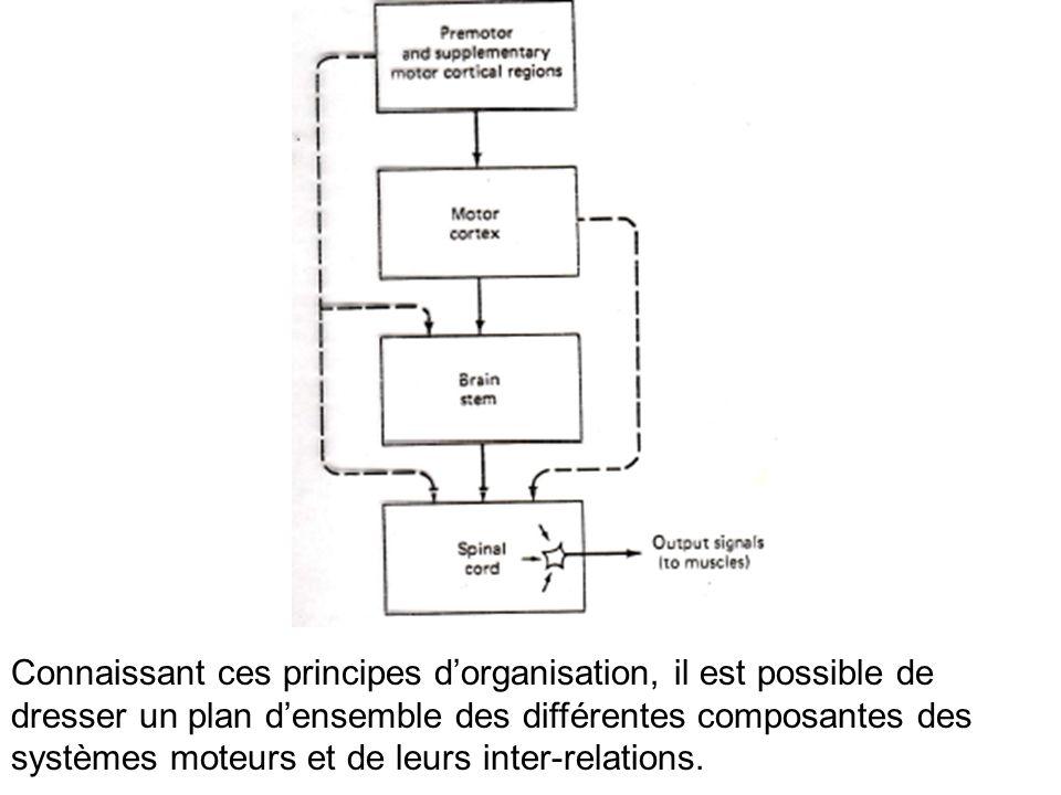 Connaissant ces principes dorganisation, il est possible de dresser un plan densemble des différentes composantes des systèmes moteurs et de leurs int