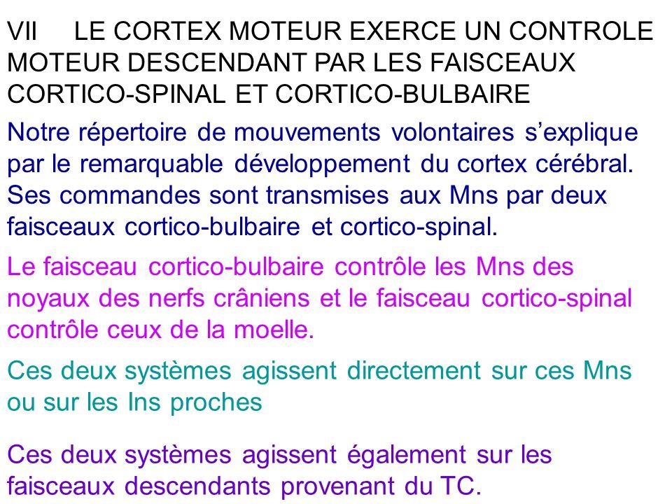 VIILE CORTEX MOTEUR EXERCE UN CONTROLE MOTEUR DESCENDANT PAR LES FAISCEAUX CORTICO-SPINAL ET CORTICO-BULBAIRE Notre répertoire de mouvements volontair