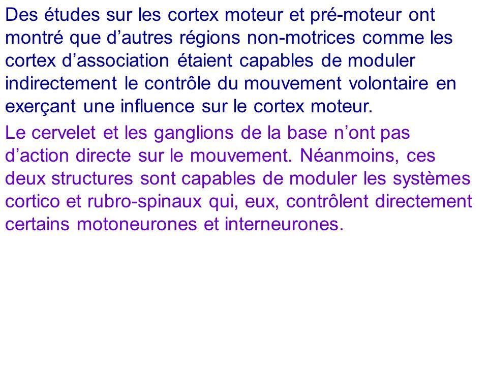 3) Les cortex moteur et pré-moteur Le cortex moteur (AB 4) voit converger les actions des plus haut-niveaux corticaux.