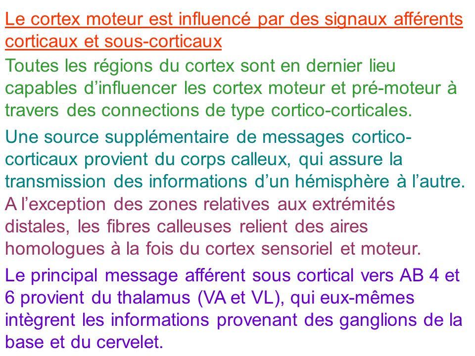 Le cortex moteur est influencé par des signaux afférents corticaux et sous-corticaux Toutes les régions du cortex sont en dernier lieu capables dinflu