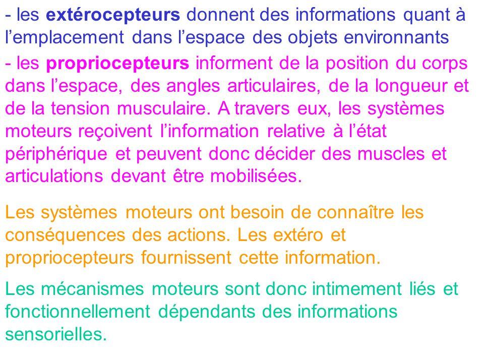 - les extérocepteurs donnent des informations quant à lemplacement dans lespace des objets environnants - les propriocepteurs informent de la position