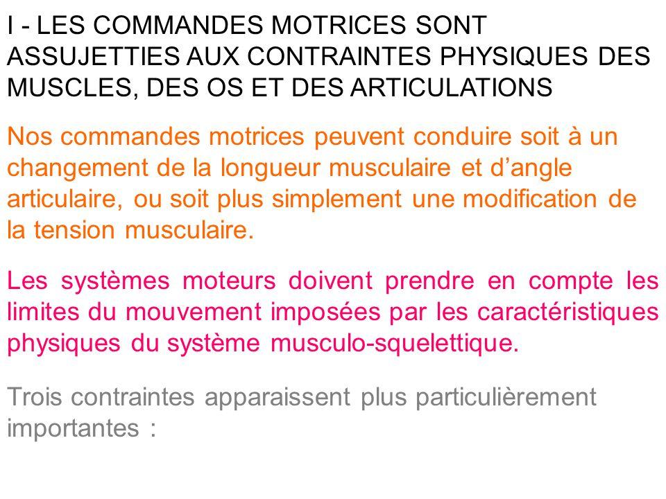 I - LES COMMANDES MOTRICES SONT ASSUJETTIES AUX CONTRAINTES PHYSIQUES DES MUSCLES, DES OS ET DES ARTICULATIONS Nos commandes motrices peuvent conduire