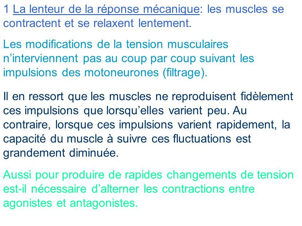 2 Les propriétés élastiques du muscle Tel un ressort, la tension exercée par les muscles varie en fonction de leur longueur Du fait de cette élasticité, les changements dans la longueur musculaire ne dépendent pas seulement des messages nerveux efférentes mais aussi de la longueur initiale du muscle et de la charge extérieure Un rôle important des mécanismes localisés dans la moelle épinière va être de compenser certaines de ces propriétés pour simplifier et rendre plus précis le contrôle de la contraction musculaire par le cerveau.