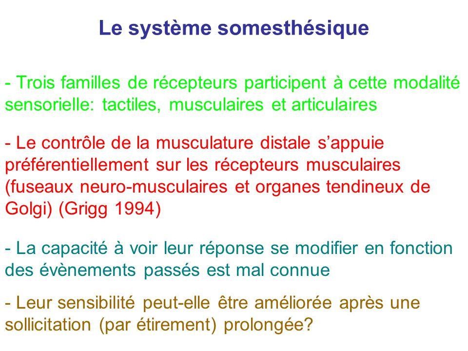 - Le contrôle de la musculature distale sappuie préférentiellement sur les récepteurs musculaires (fuseaux neuro-musculaires et organes tendineux de G