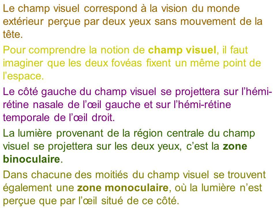 Le champ visuel correspond à la vision du monde extérieur perçue par deux yeux sans mouvement de la tête. Pour comprendre la notion de champ visuel, i