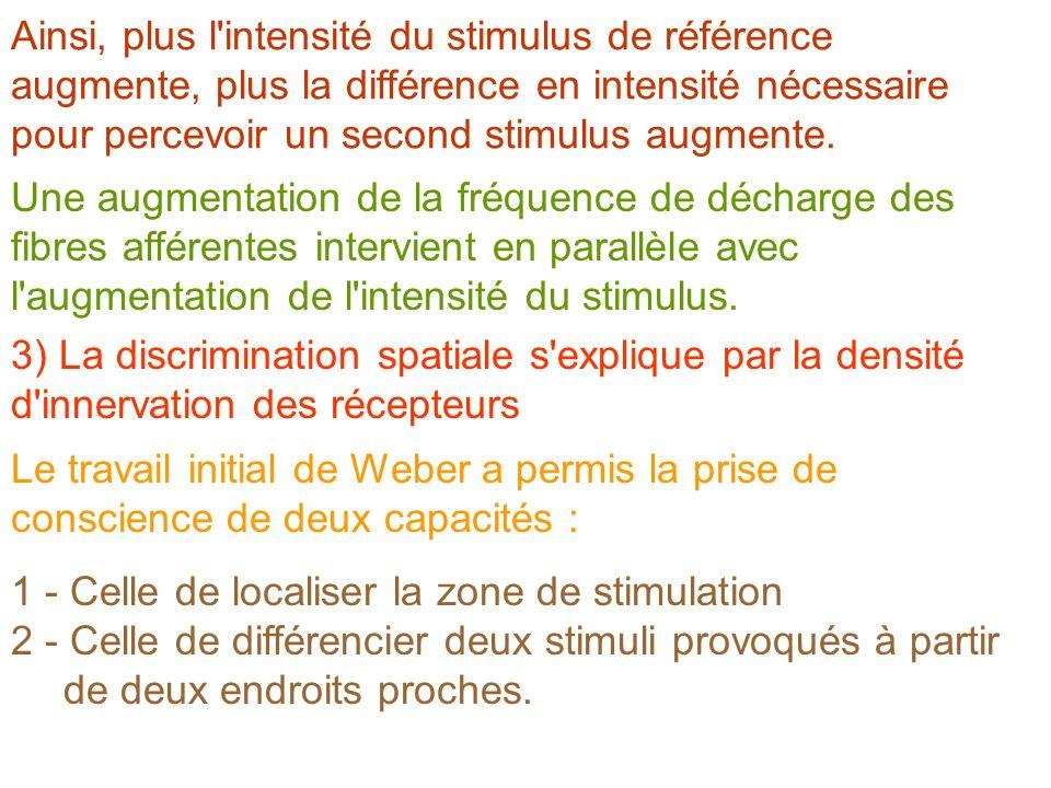 Une augmentation de la fréquence de décharge des fibres afférentes intervient en parallèle avec l'augmentation de l'intensité du stimulus. Ainsi, plus