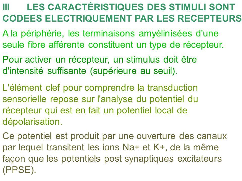 IIILES CARACTÉRISTIQUES DES STIMULI SONT CODEES ELECTRIQUEMENT PAR LES RECEPTEURS A la périphérie, les terminaisons amyélinisées d'une seule fibre aff