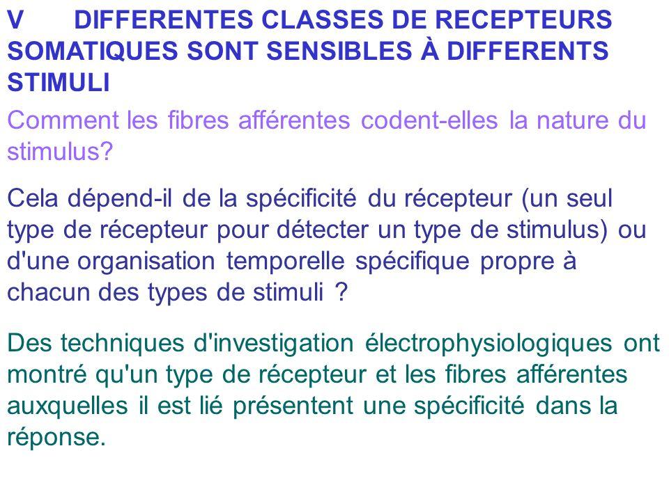 VDIFFERENTES CLASSES DE RECEPTEURS SOMATIQUES SONT SENSIBLES À DIFFERENTS STIMULI Comment les fibres afférentes codent-elles la nature du stimulus? Ce