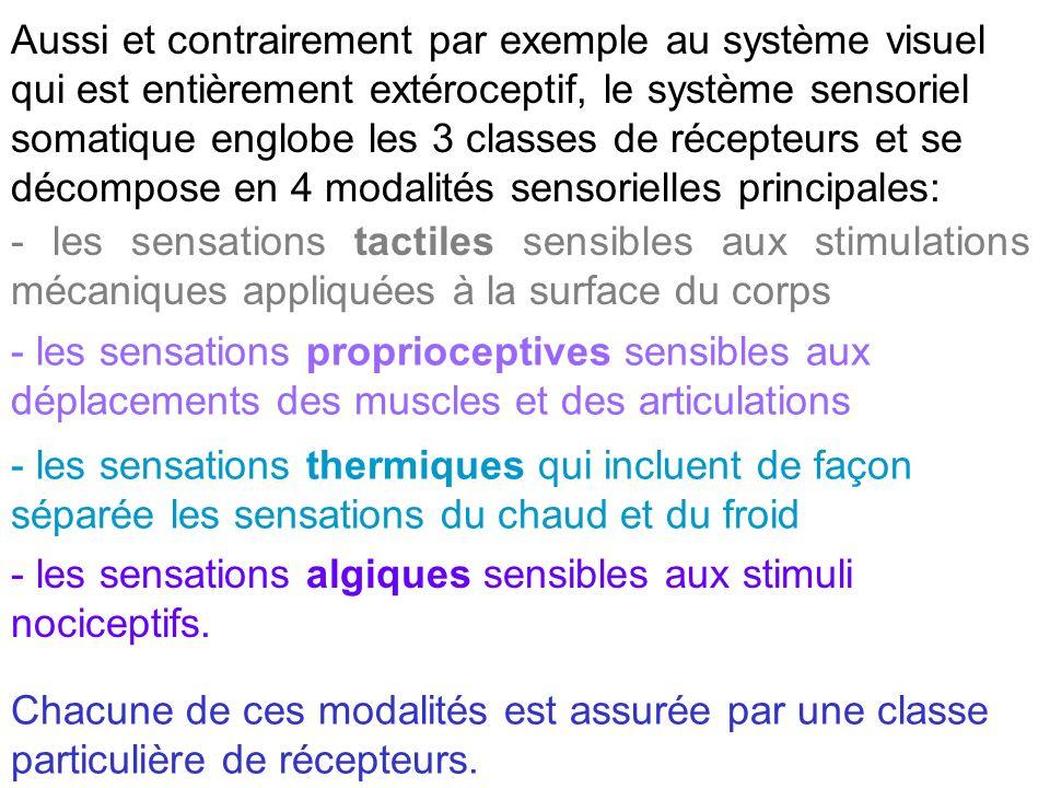 Aussi et contrairement par exemple au système visuel qui est entièrement extéroceptif, le système sensoriel somatique englobe les 3 classes de récepte