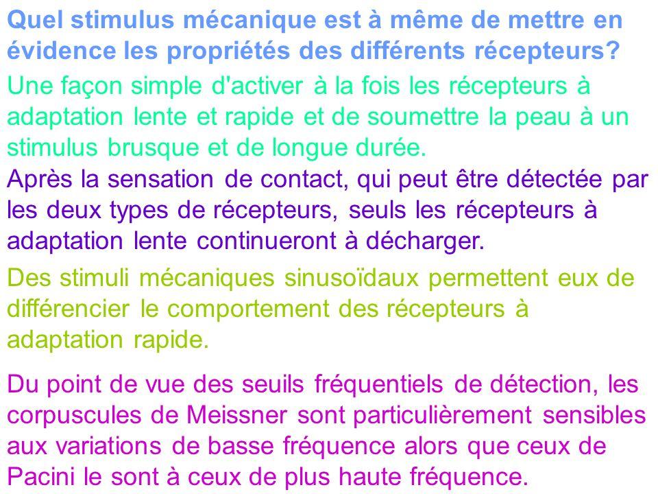 Quel stimulus mécanique est à même de mettre en évidence les propriétés des différents récepteurs? Une façon simple d'activer à la fois les récepteurs