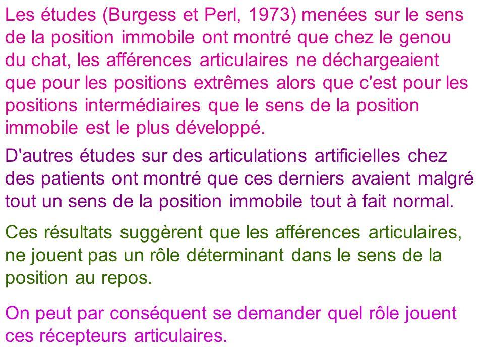 Les études (Burgess et Perl, 1973) menées sur le sens de la position immobile ont montré que chez le genou du chat, les afférences articulaires ne déc