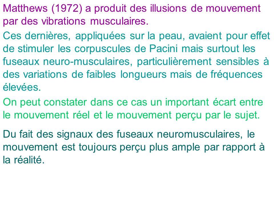Ces dernières, appliquées sur la peau, avaient pour effet de stimuler les corpuscules de Pacini mais surtout les fuseaux neuro-musculaires, particuliè